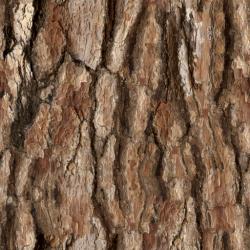 Pine Bark Textures 6