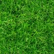 Grass Textures lawn dark