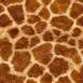 Girafe Fur