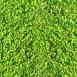 Grass Textures clover