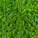 Grass Textures clover dark