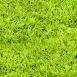 Grass Textures fresh