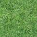 Grass Textures lawn