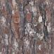 Pine Bark Textures 1