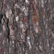 Pine Bark Textures 2
