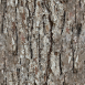 Pine Bark Textures 3