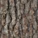 Pine Bark Textures 4