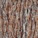Pine Bark Textures 5
