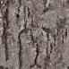 Pine Bark Textures 7